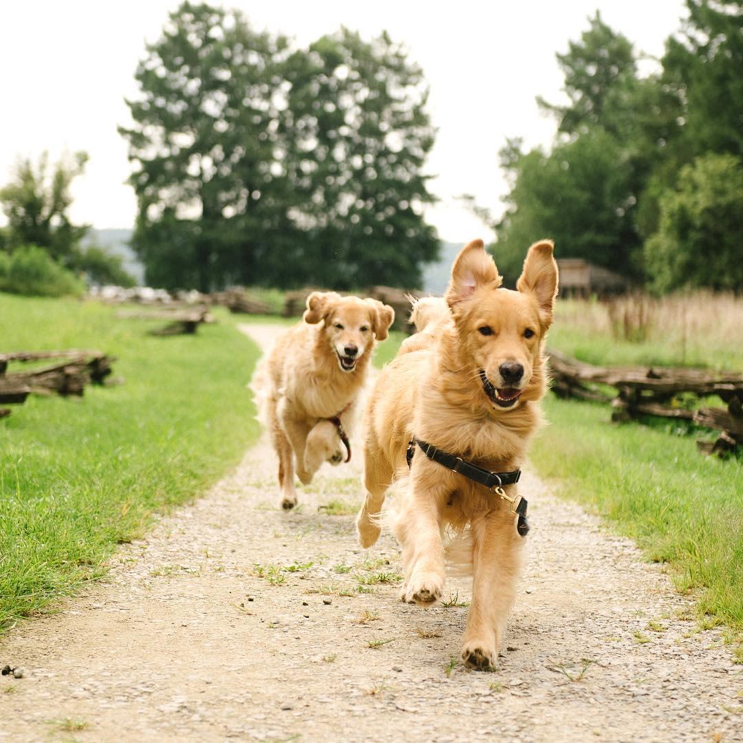 Dogs enjoying Mount Vernon, by Samantha Brooke
