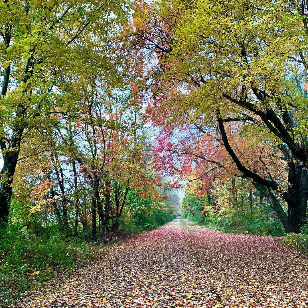 Washington and Old Dominion Trail, covered in autumn leaves