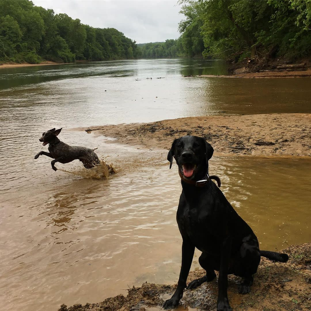 Dogs at Oconee River Greenway