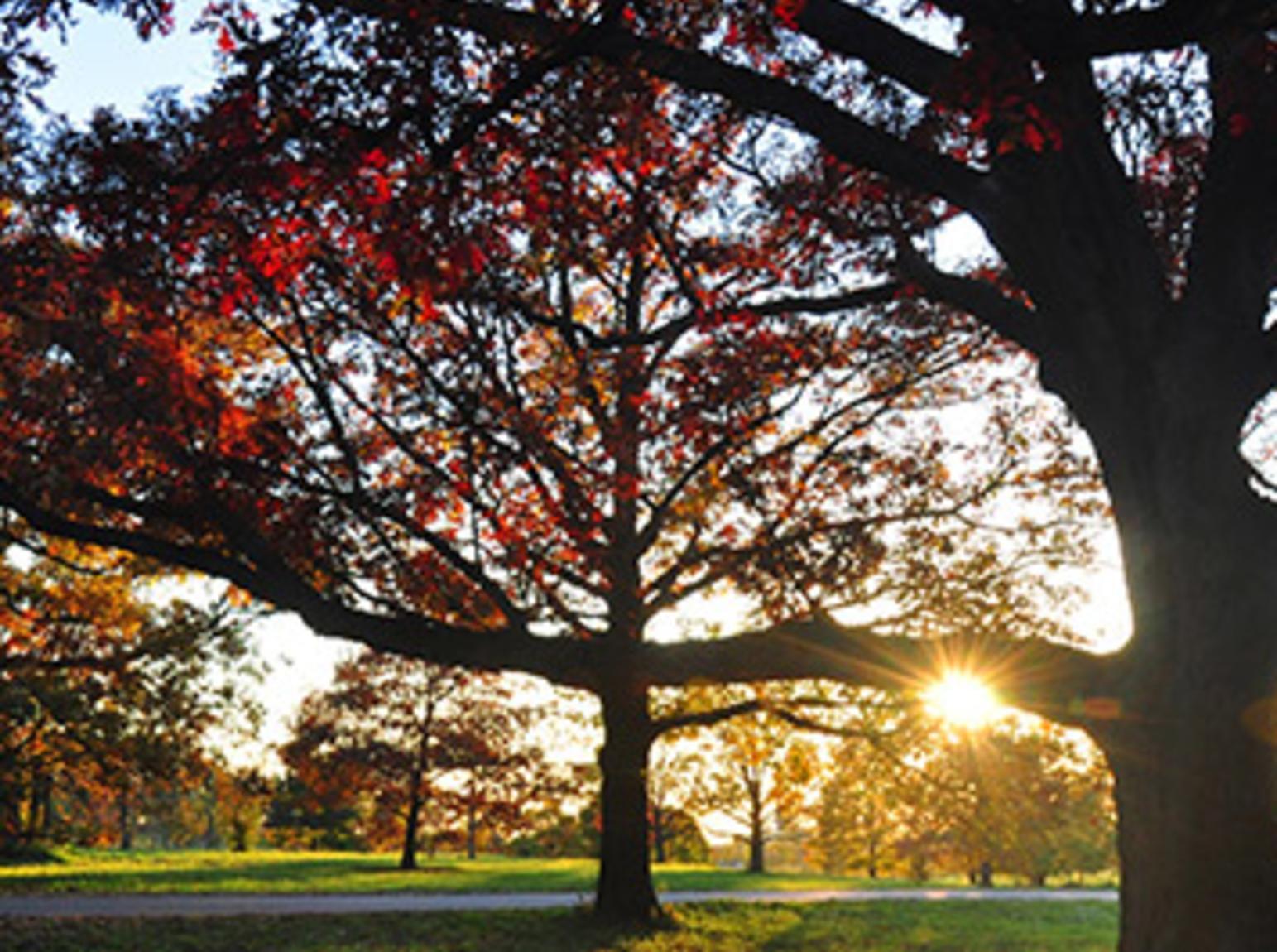 Tree Dimensional2.jpg