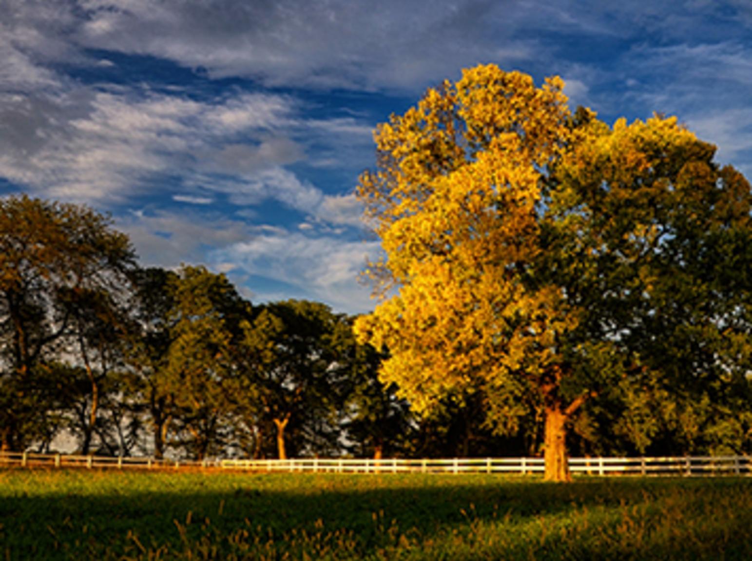 st-james-farm-fall-in-foal-form-carlton-holls-485x265.jpg