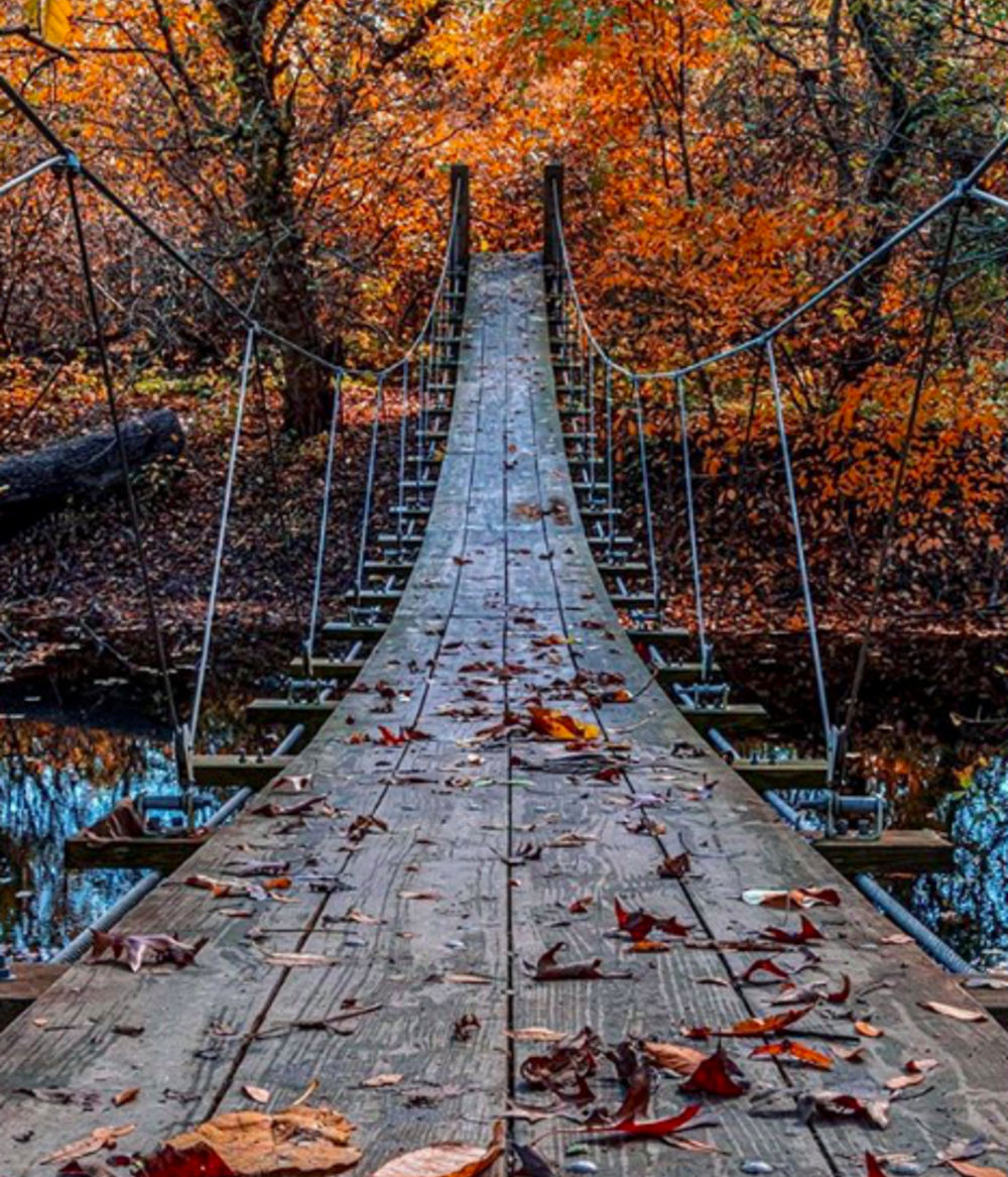 Swinging bridge in Institute Woods near Princeton