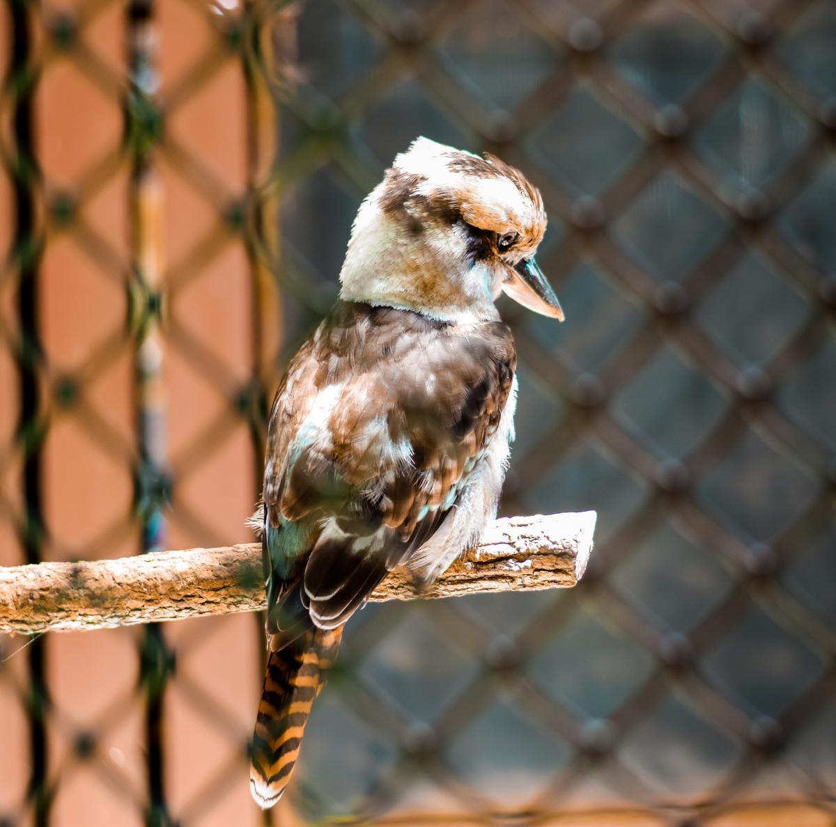 Copy of Carolina Raptor Center