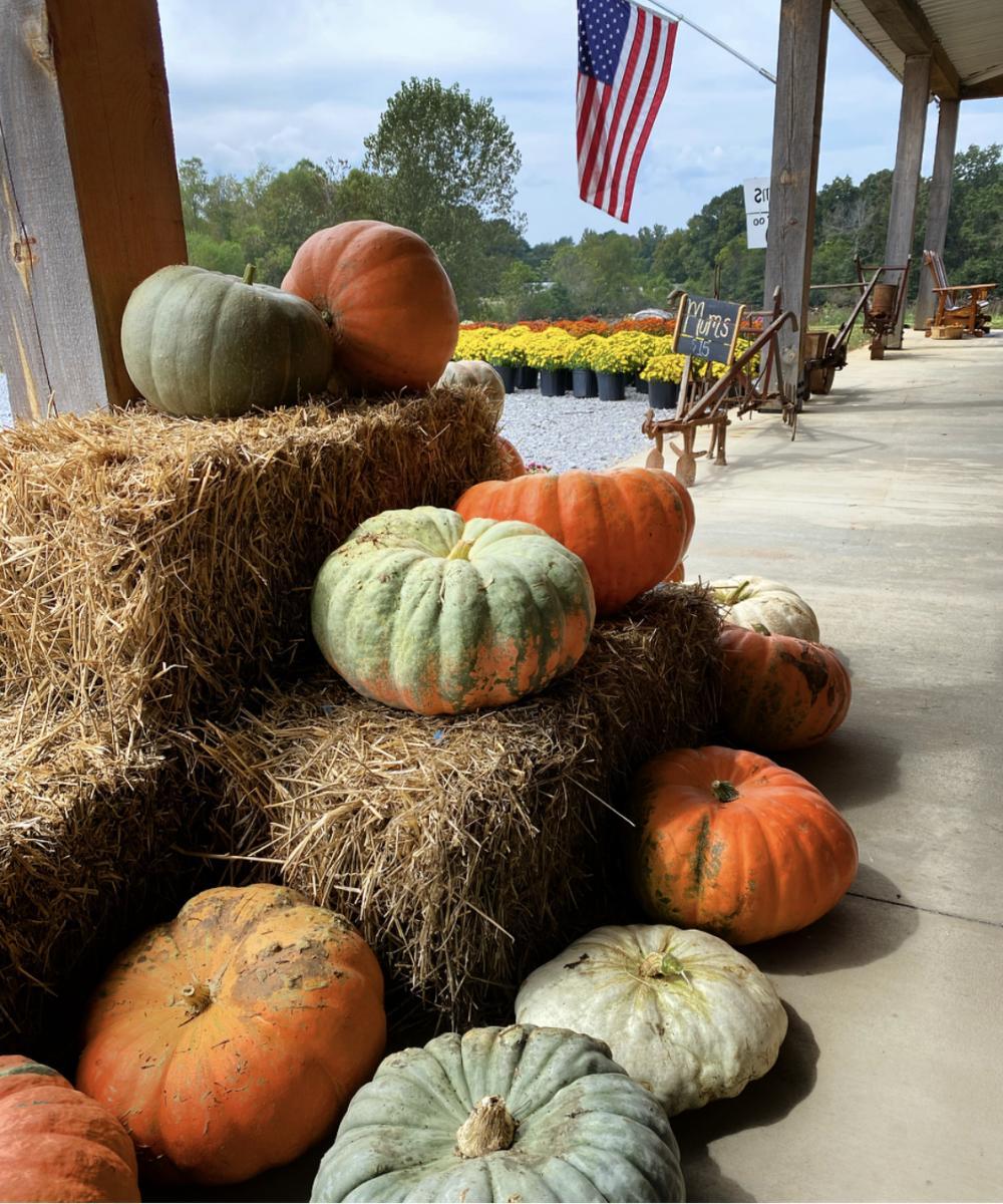 reeves pumpkins