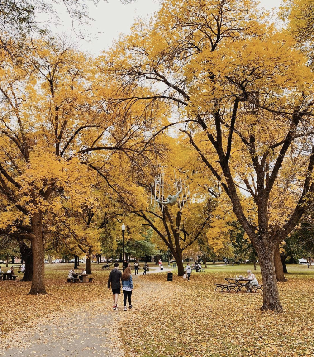 Yellow fall leaves abound at Schiller Park