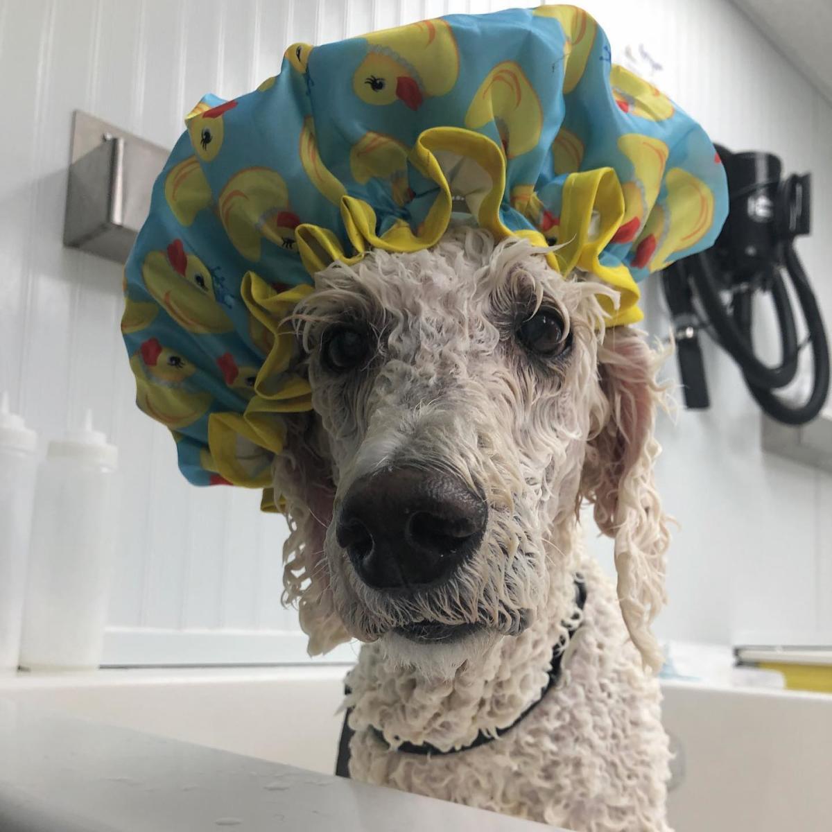 Doggie Day Spa bath