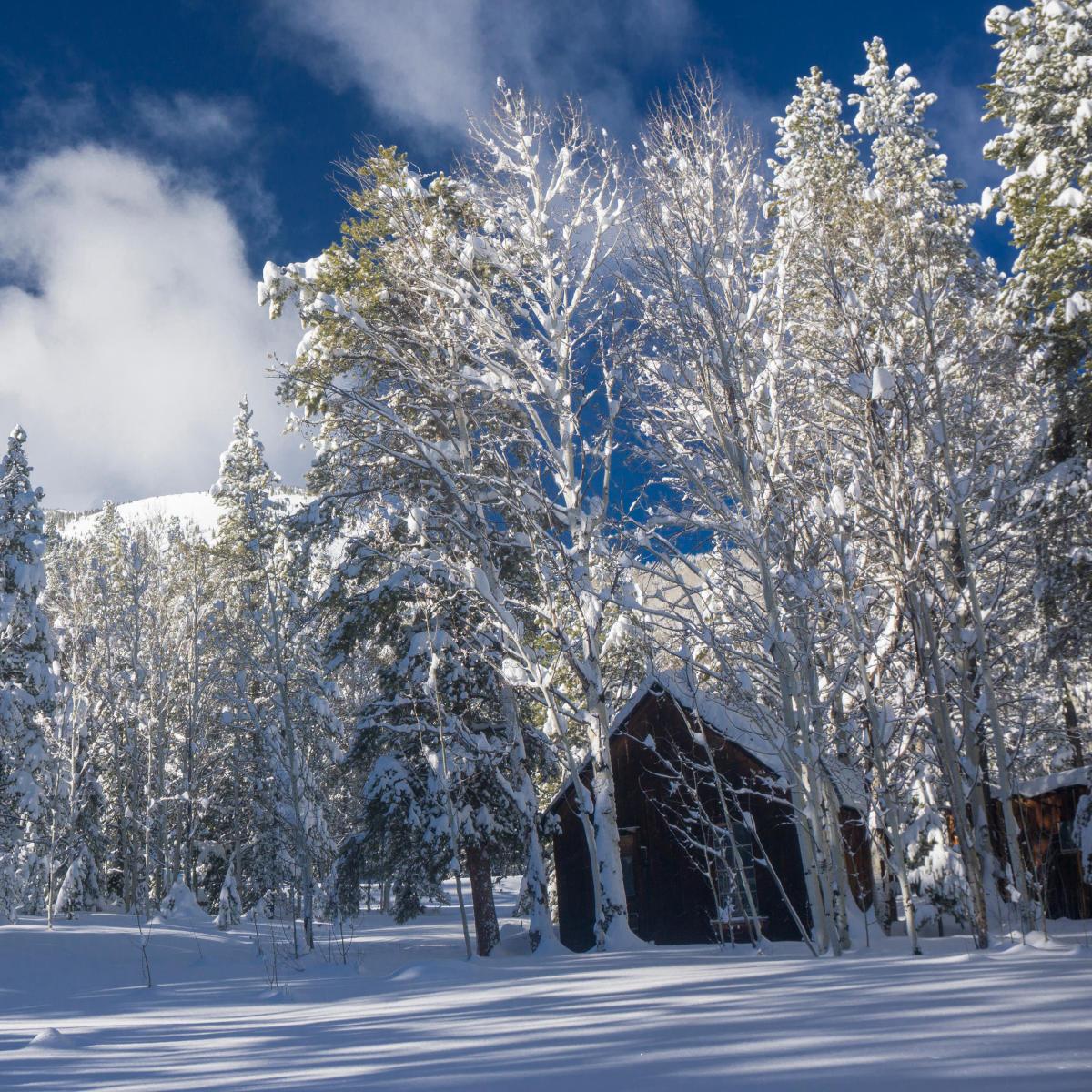 Vallecito Cabin in Winter