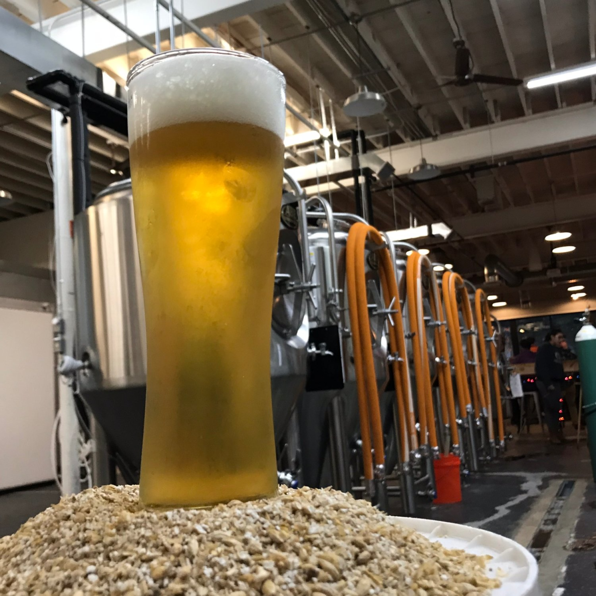 Settle Down Easy Brewing: No 1 Dry Hopped Kolsch