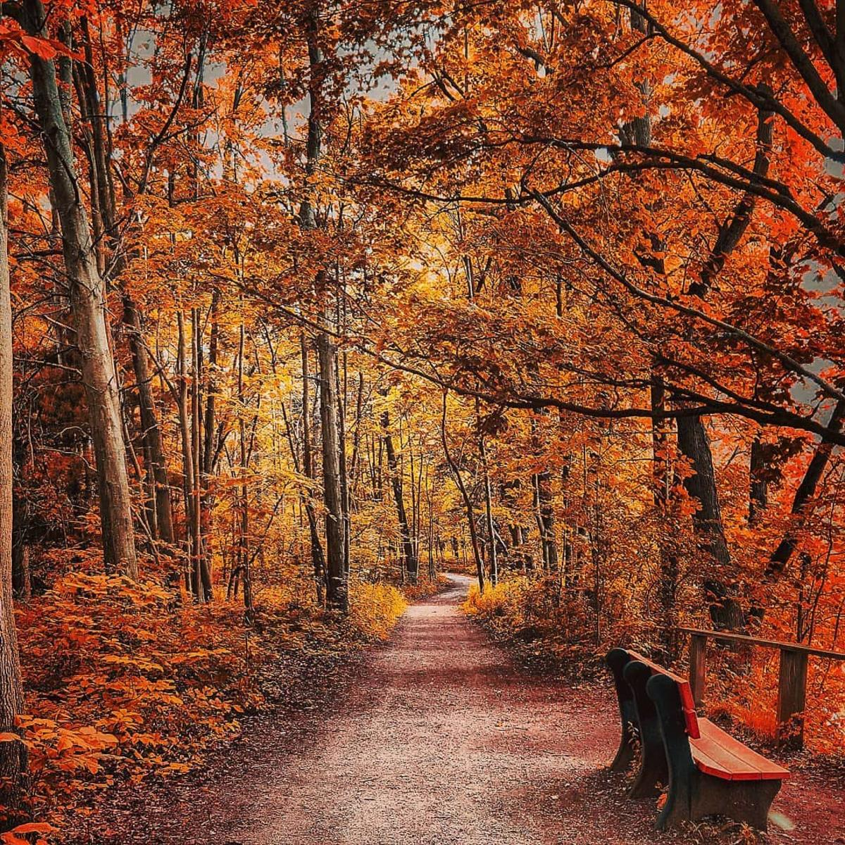 A canopy of brilliant, fall-colored trees over the trails at Chippewa Nature Center in Midland