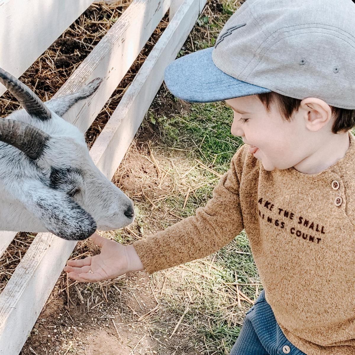 Boy feeding goat in the petting zoo at Grandpa Tiny's Farm in Frankenmuth
