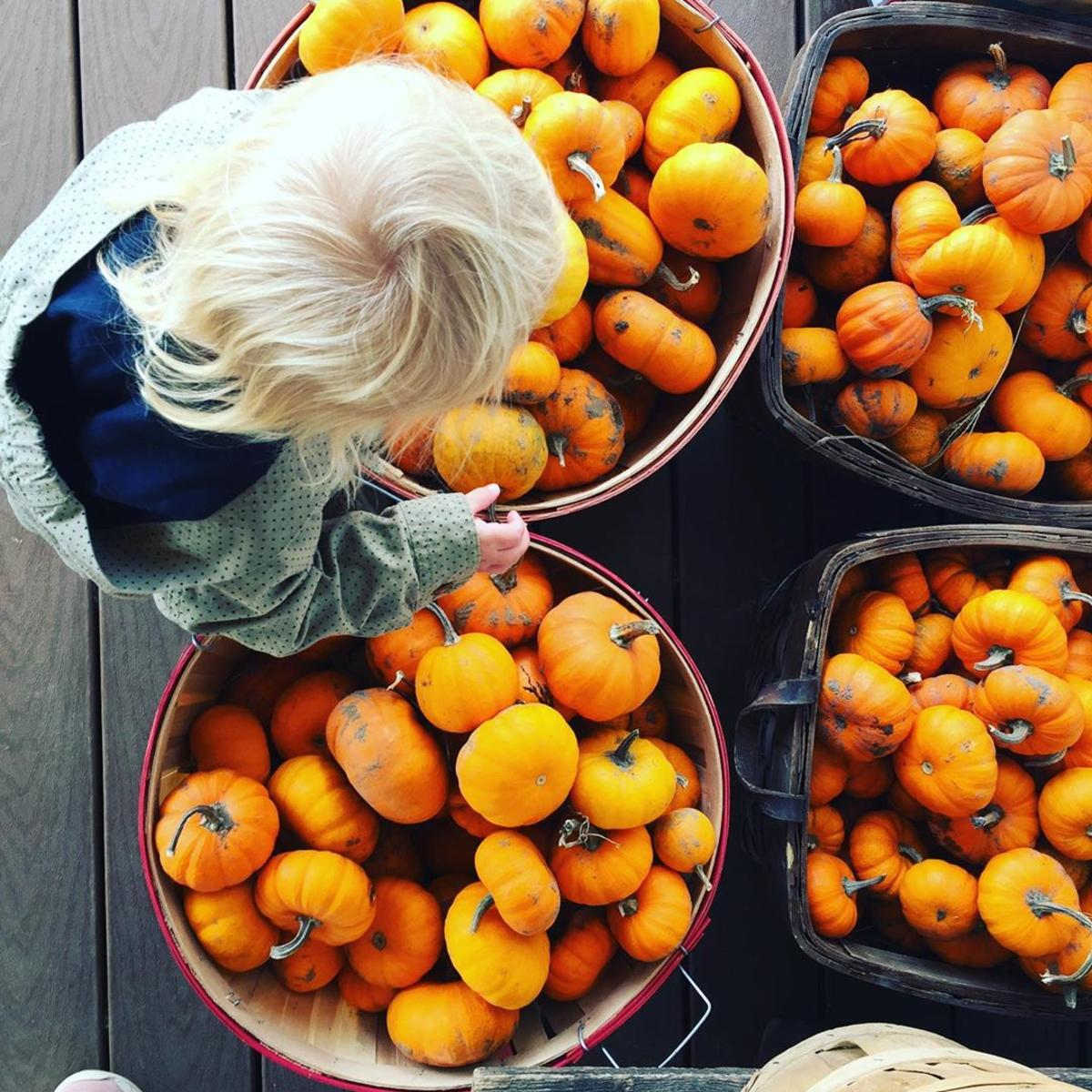 Child picking out pumpkins and gourds at Leaman's Green Applebarn