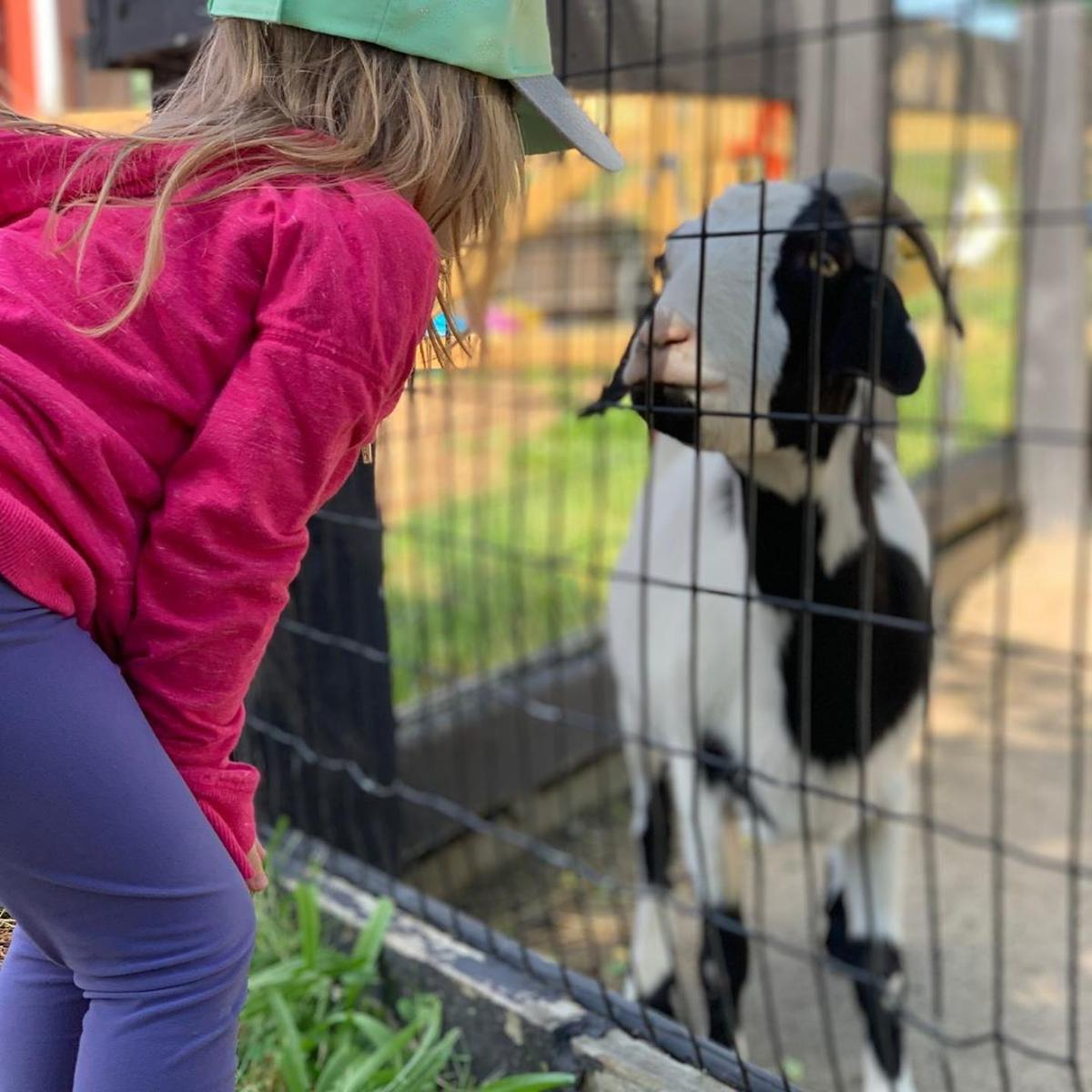 Girl looking at a goat at Saginaw Children's Zoo