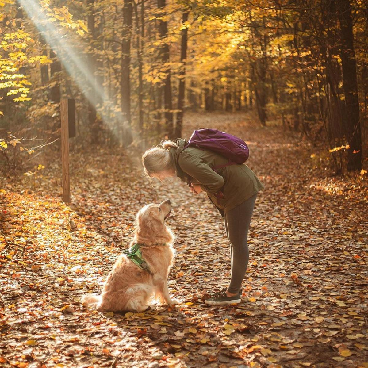 Woman leaning over to pet her golden retriever on a trail covered in fall leaves at Midland City Forest