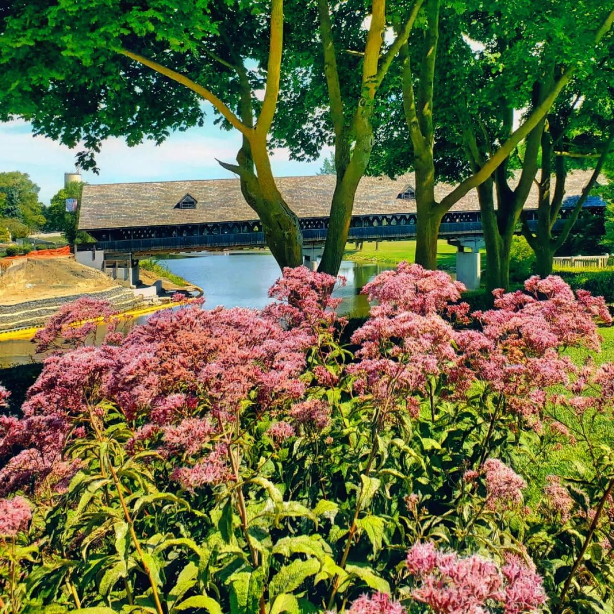 Pink flowers in front of the Holz Brücke Wooden Covered Bridge in Frankenmuth