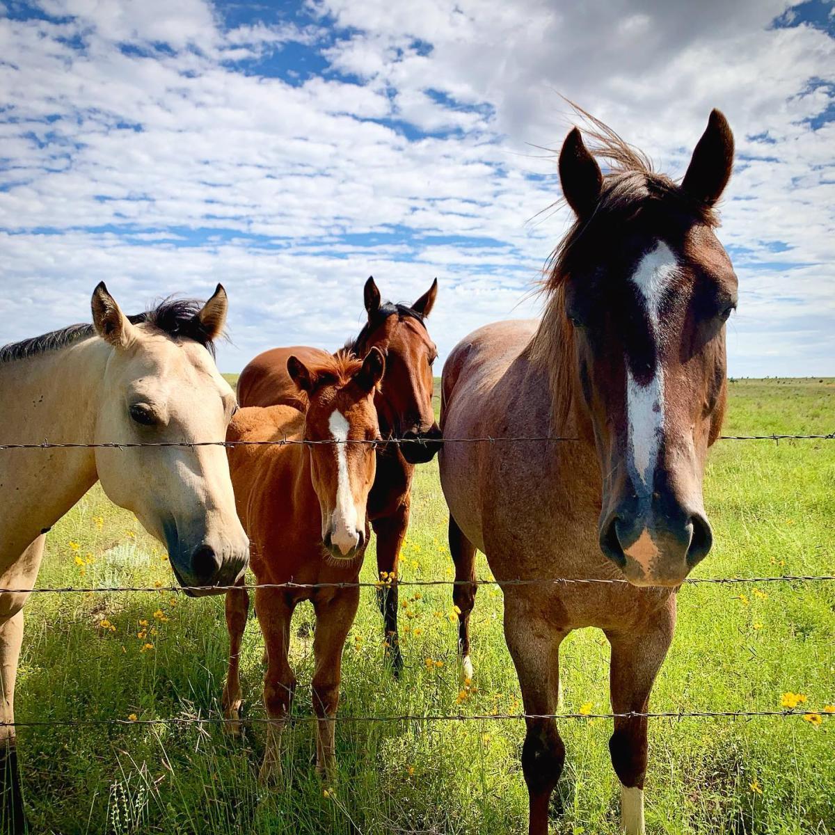 Horses Instagram Photo Contest Winner
