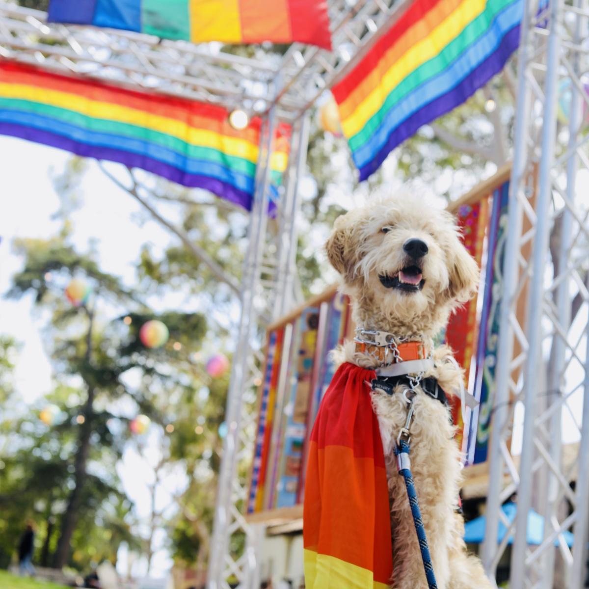 Dog wearing a Pride Flag during SLO CAL Pride Celebration