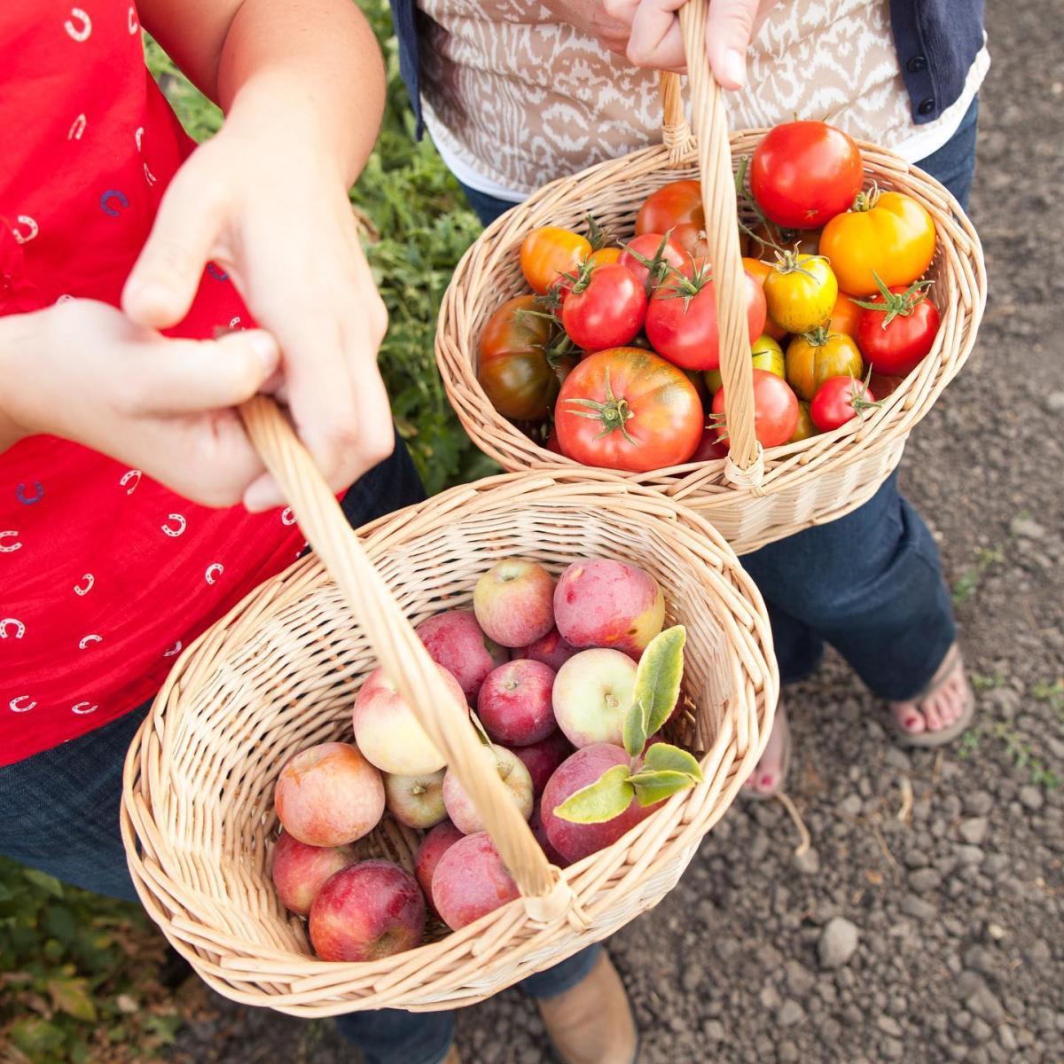 apple picking at Jack Creek Farms