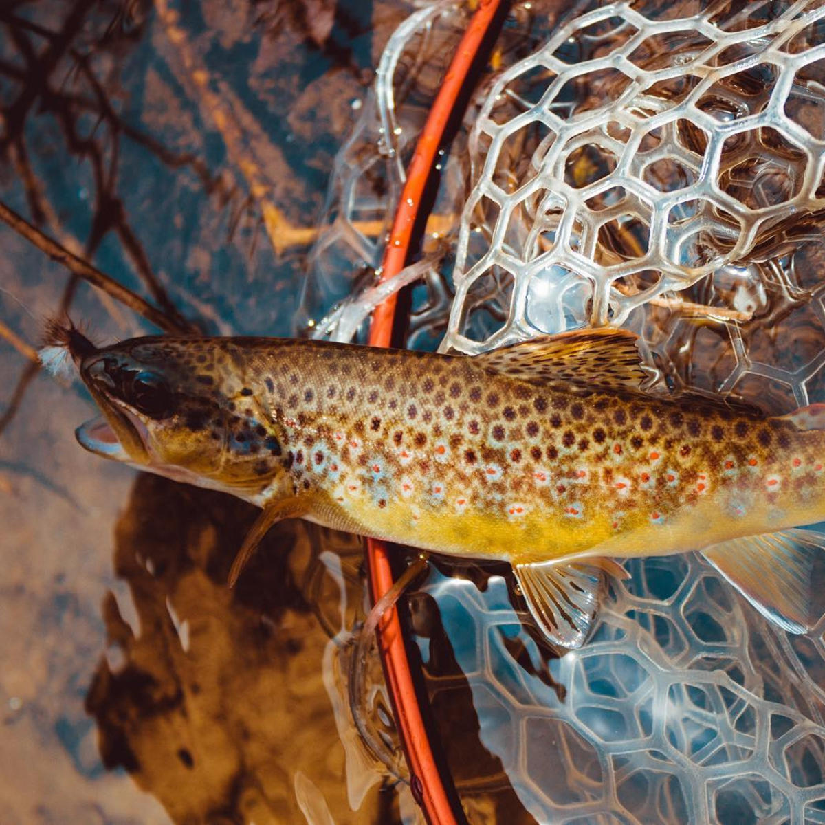 Reel in a great catch, fishing in the Stevens Point Area.