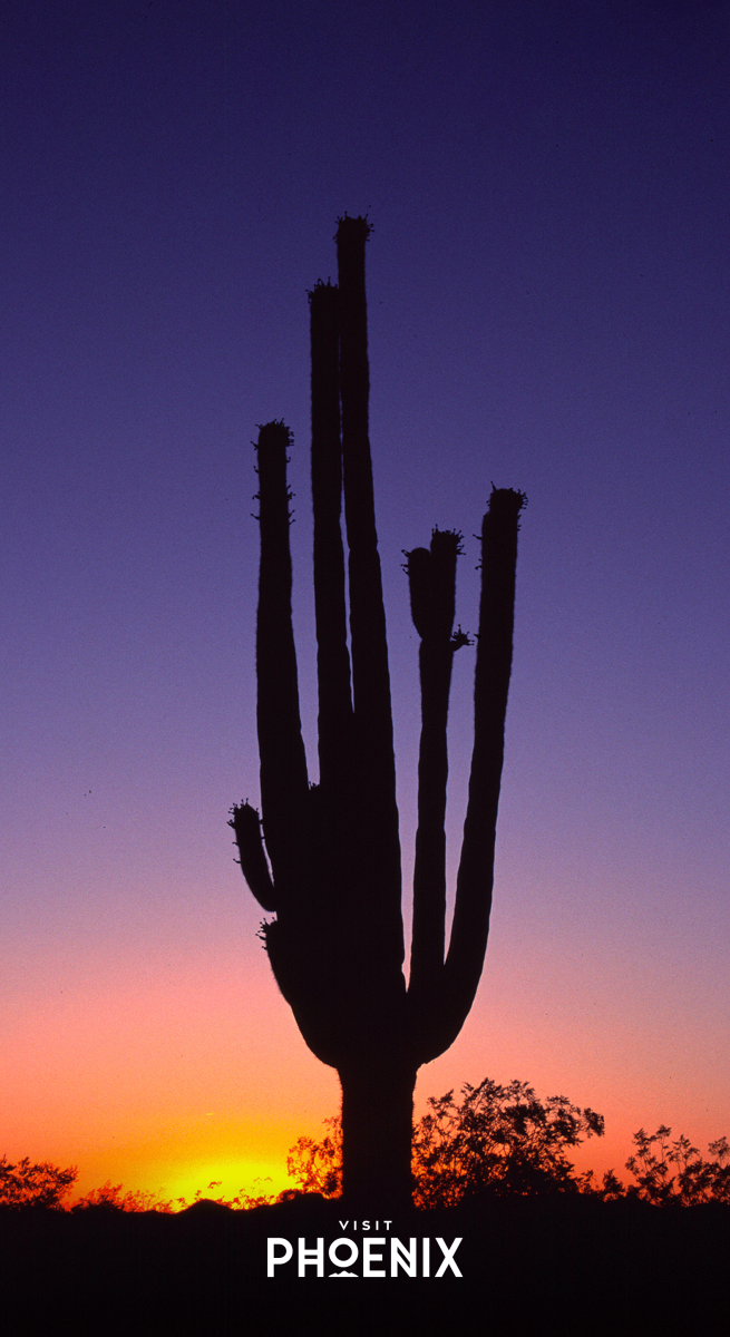 A cactus at sunset