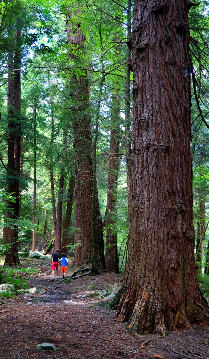 Hemlock Trail Laurel Hill State Park