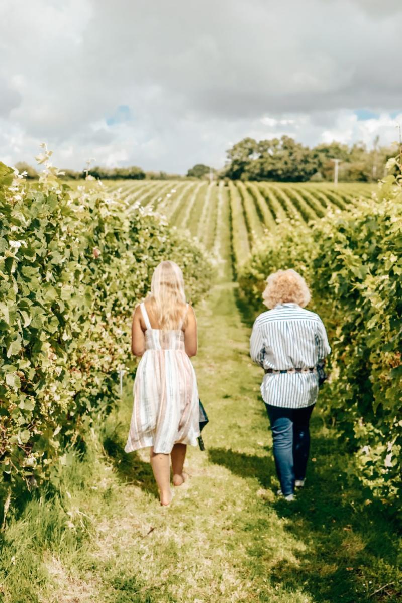 Two people walking along the vines at English Oak Vineyard