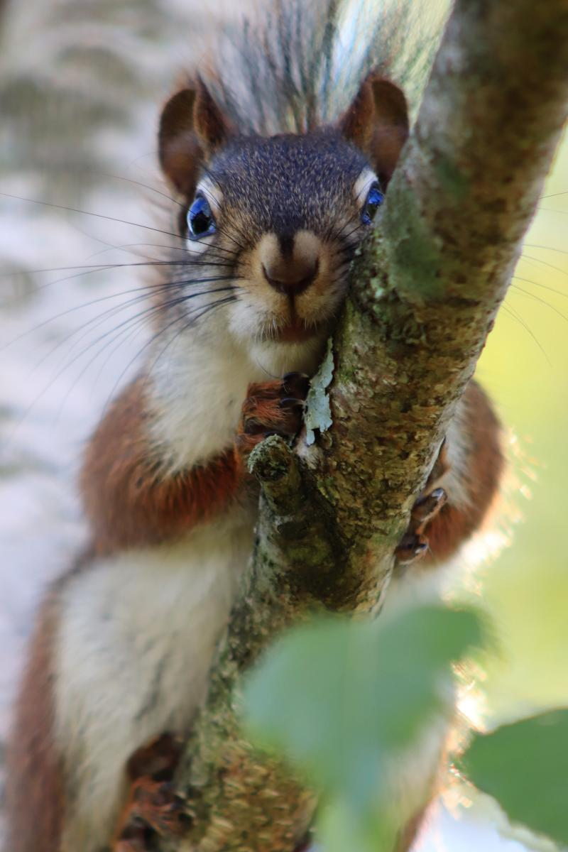 Carolyn Anderson, New Alexandria - Squirrel