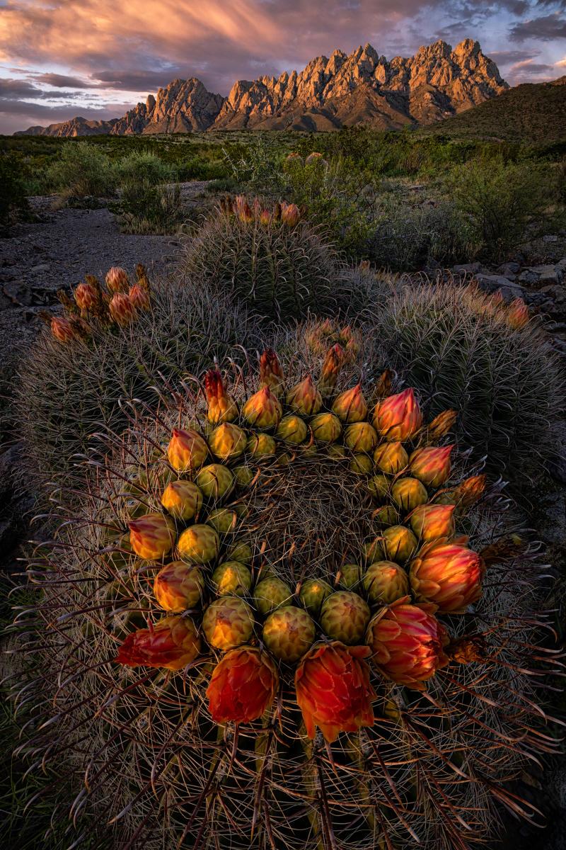 Anillos Rojos, Photograph by David Turning, New Mexico Magazine