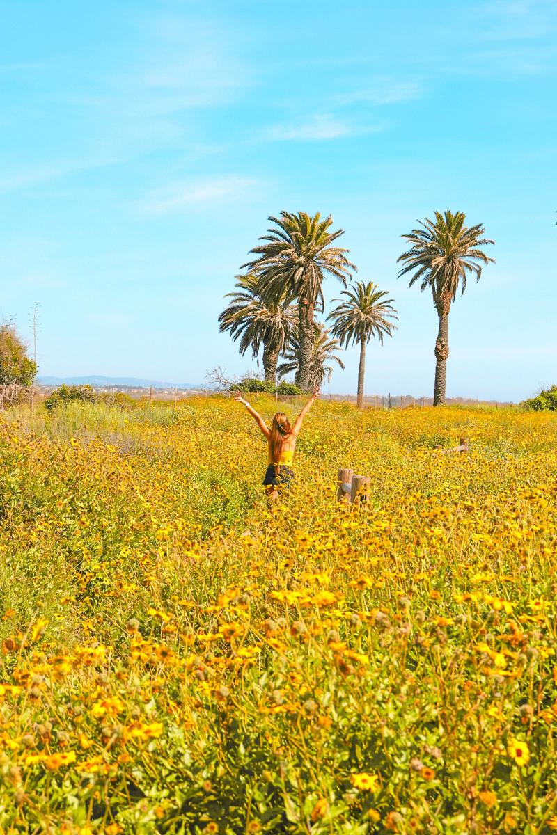 Bolsa Chica Ecological Reserve, Huntington Beach