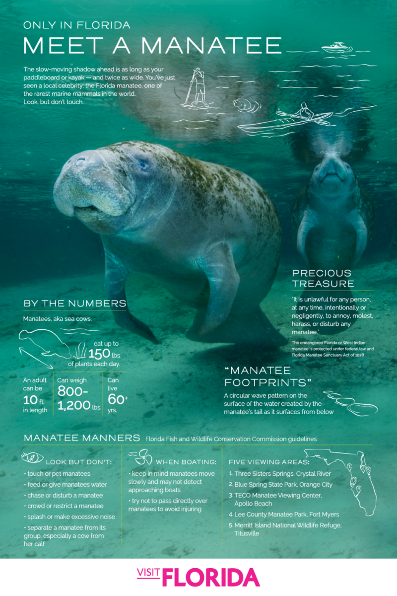 Download the Florida Manatee Infographic