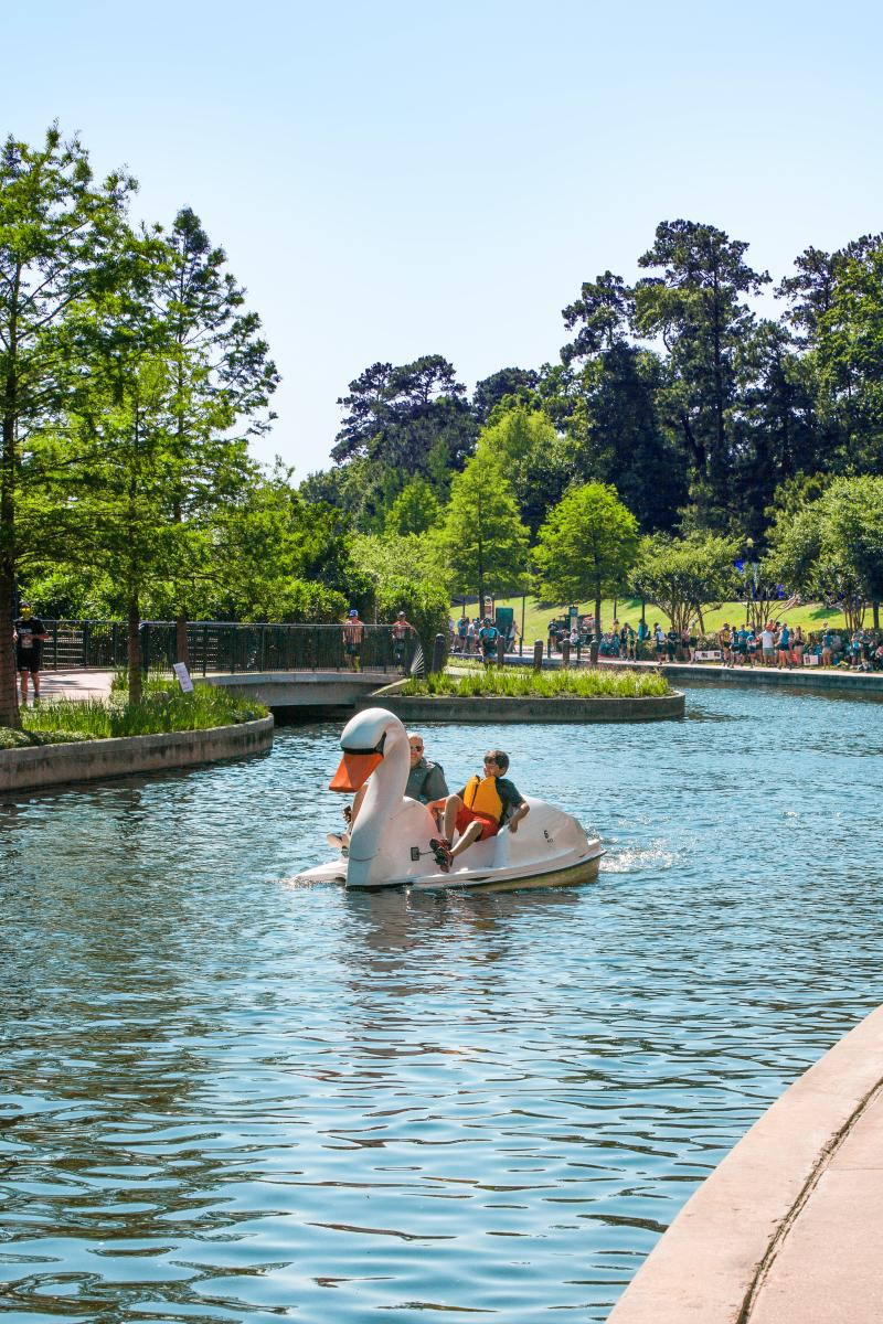 Swan Boats on The Waterway