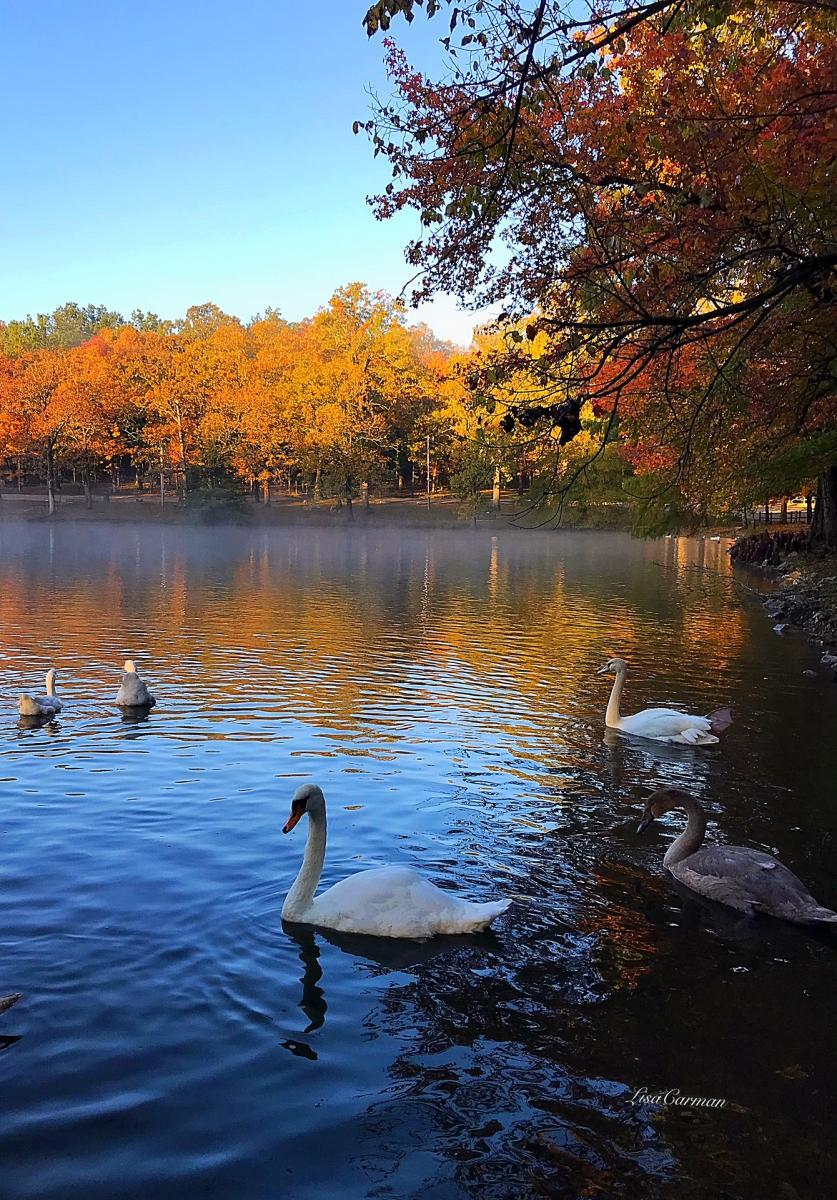 Dunnegan Park in Bolivar Missouri