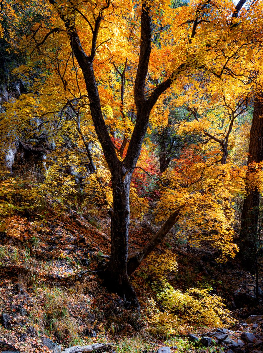 Native trees, shrubs, and ivy erupt in tones that range from pale yellow to a deep burgundy