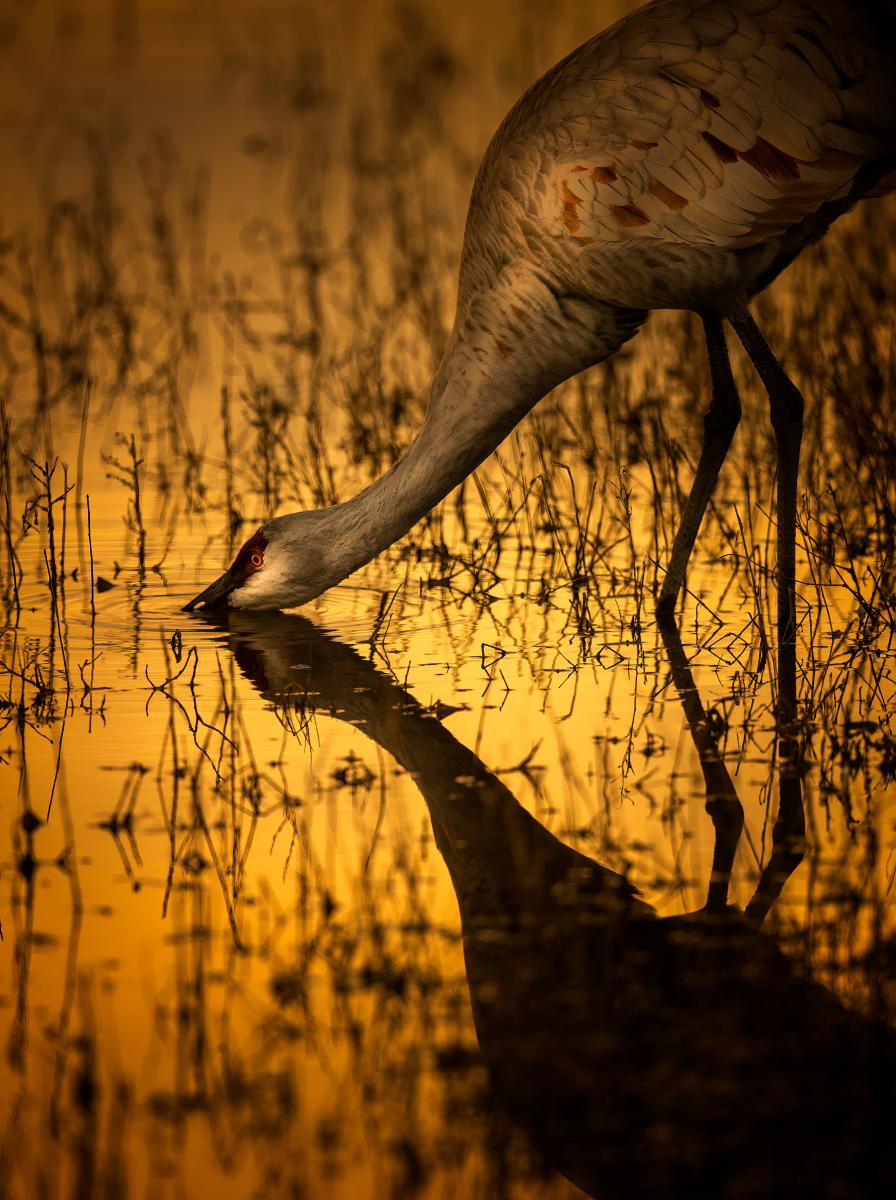 Sandhill Reflections, Photograph by Pam Dorner, New Mexico Magazine