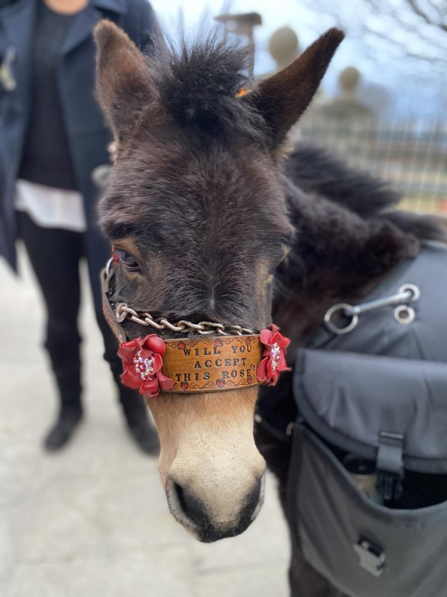 The Bachelor Donkey Date