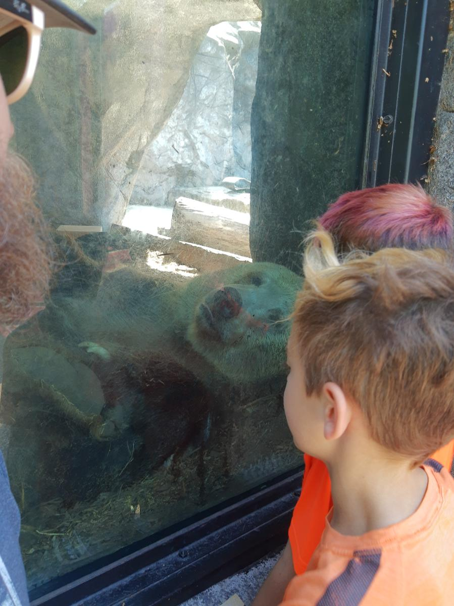 Yes Day in NWI - Washington Park Zoo bear