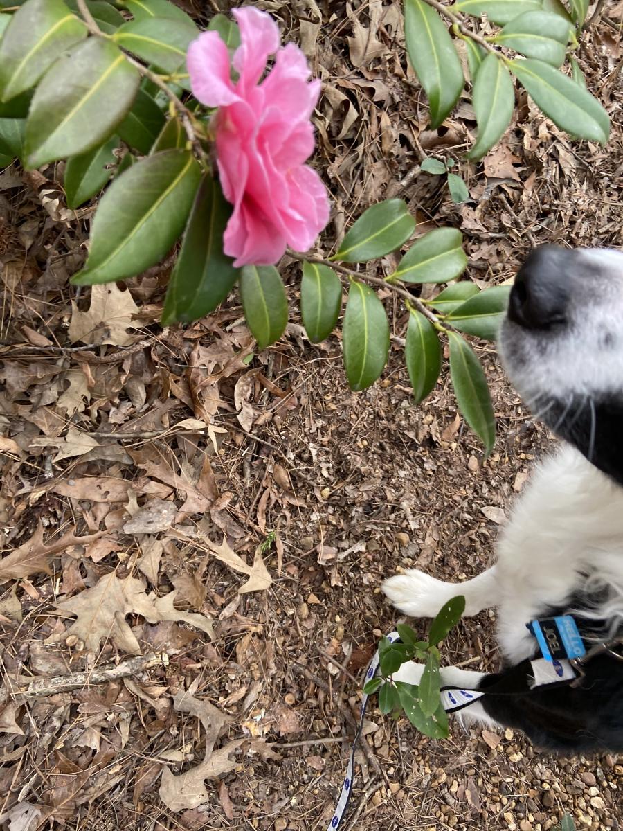 Huntsville Botanical Garden Dog Days