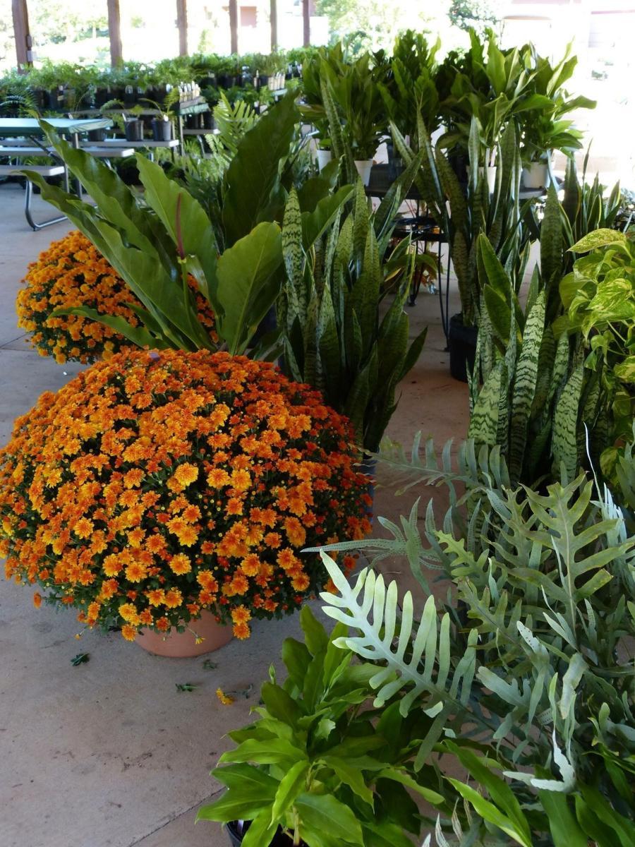 Plant Sale Huntsville Botanical Garden