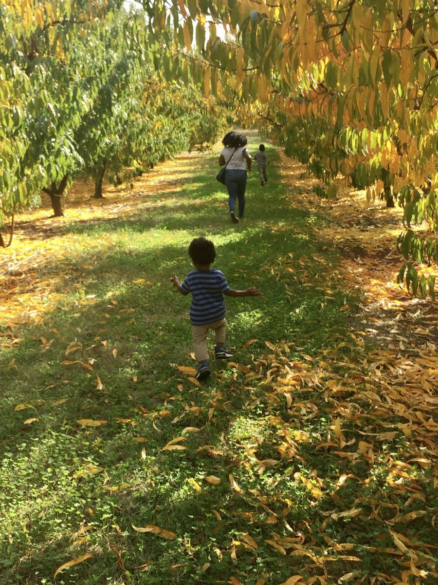 Apple Picking Scott's