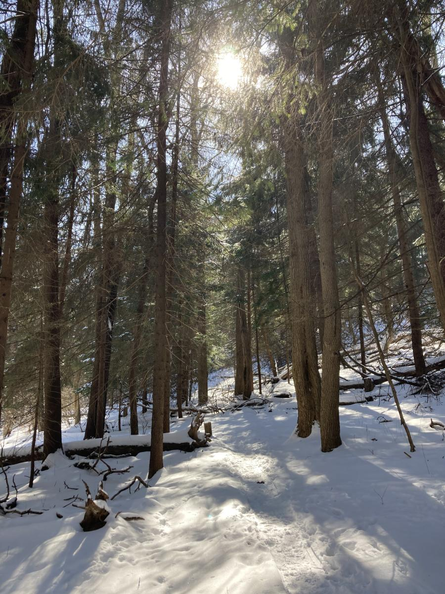Horse Trail, Twin Lakes Park, late winter