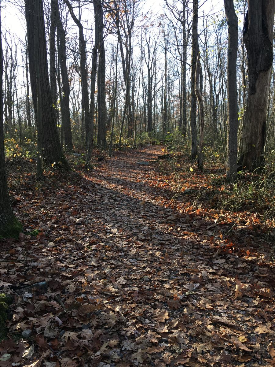 Beam Rock Trail, Forbes State Forest, early spring