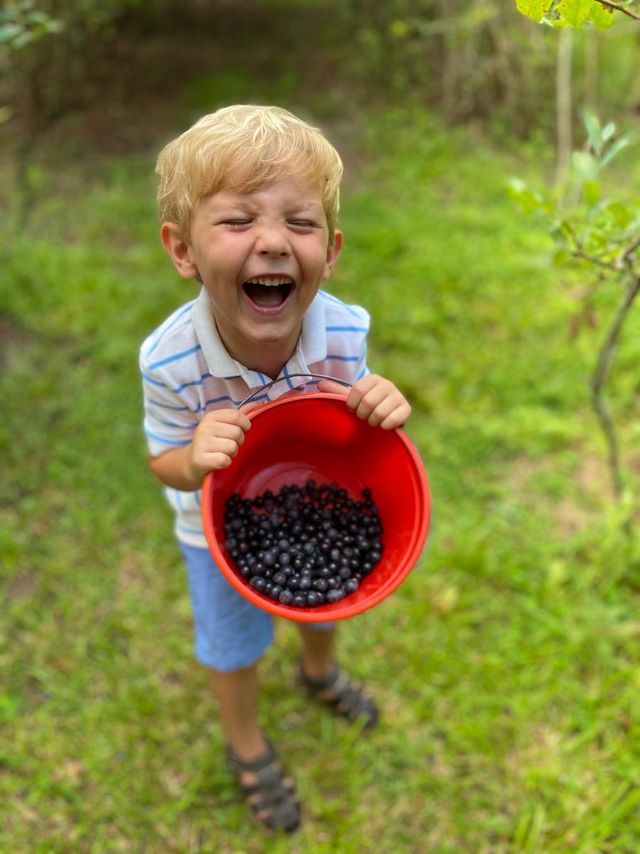 Potluck Blueberry Farm