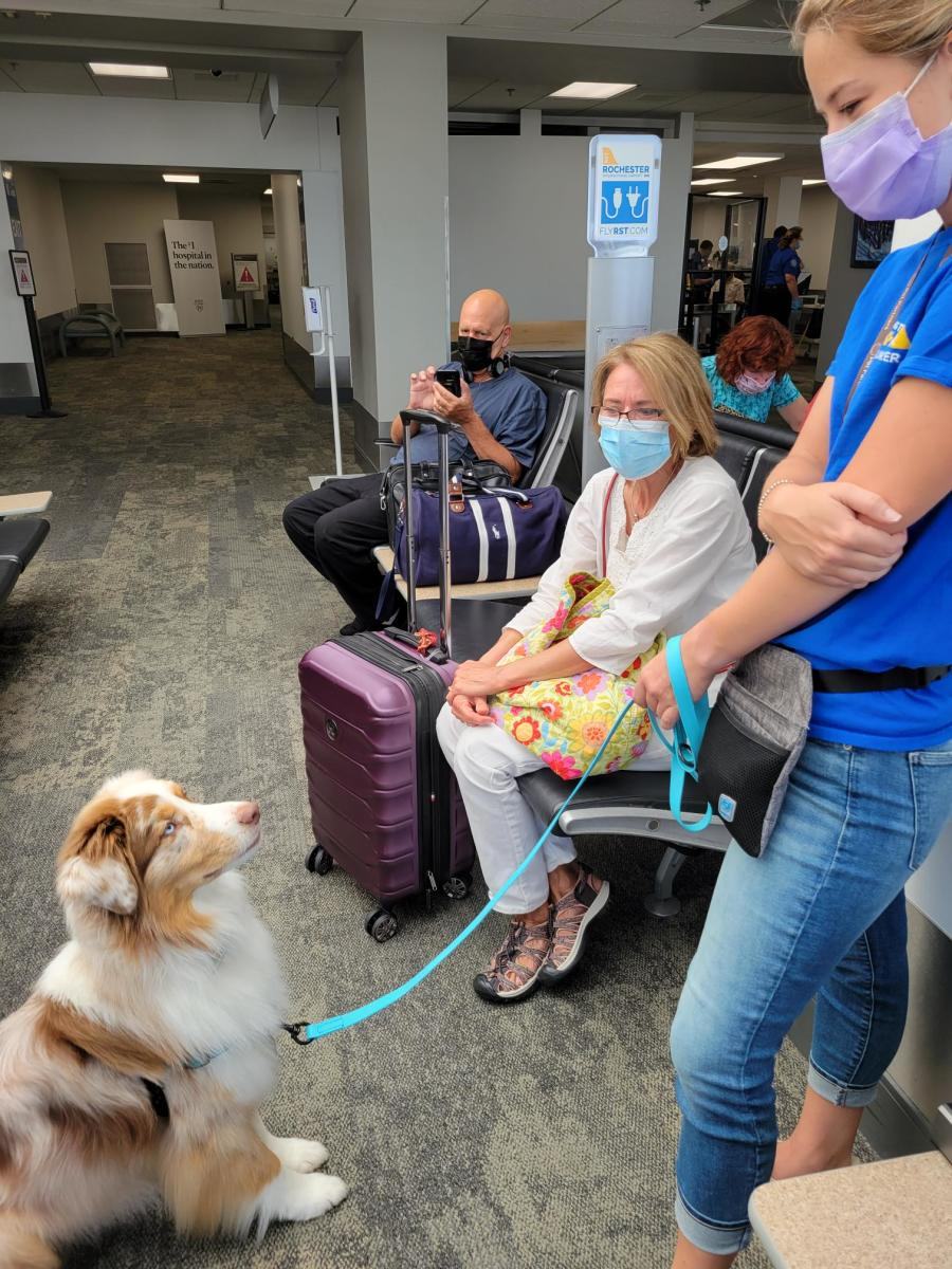 therapy dog with handler and travelers at RST