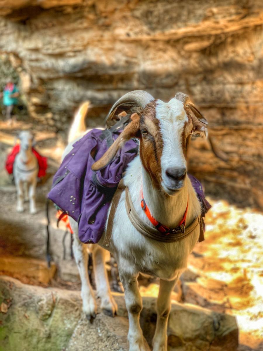 Goat Hike & Winery