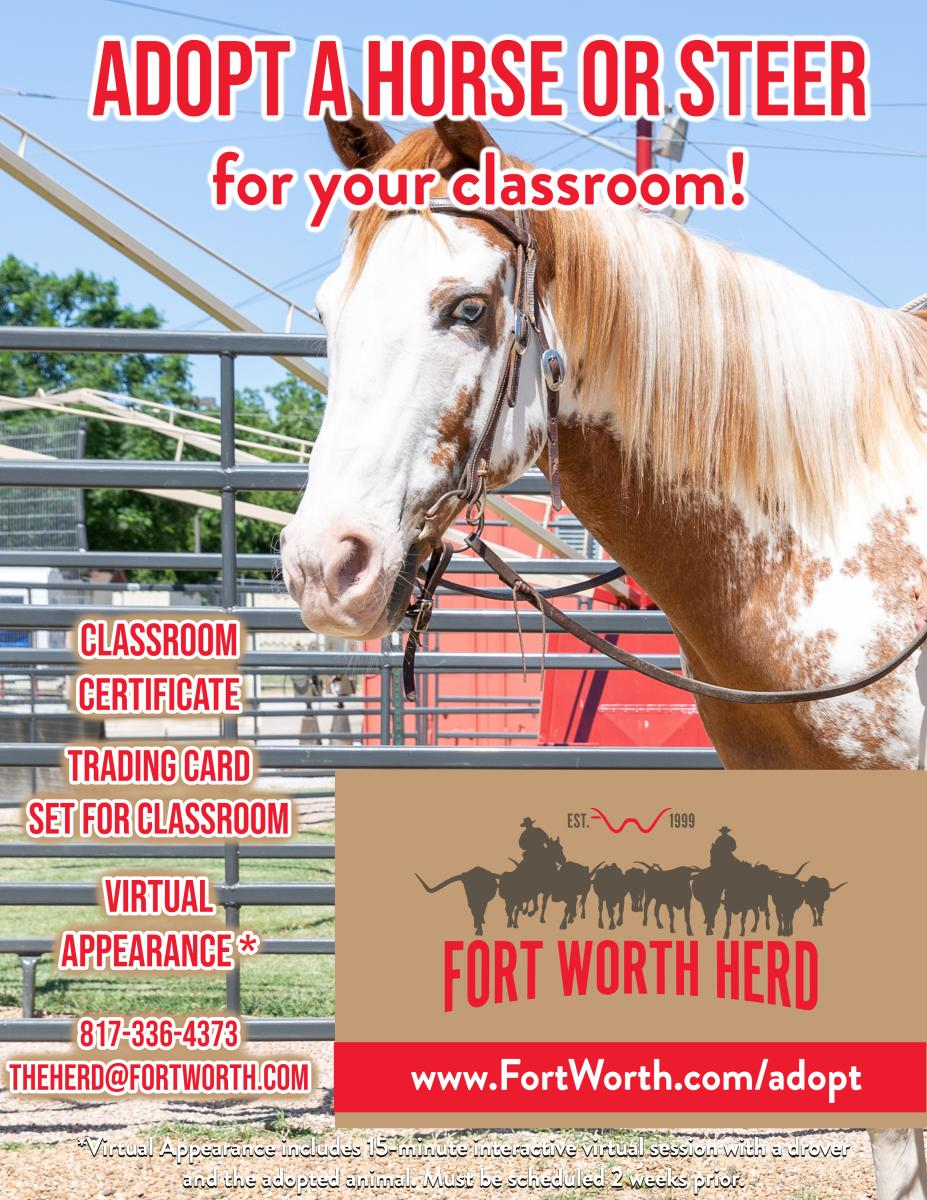 Horse for Classroom