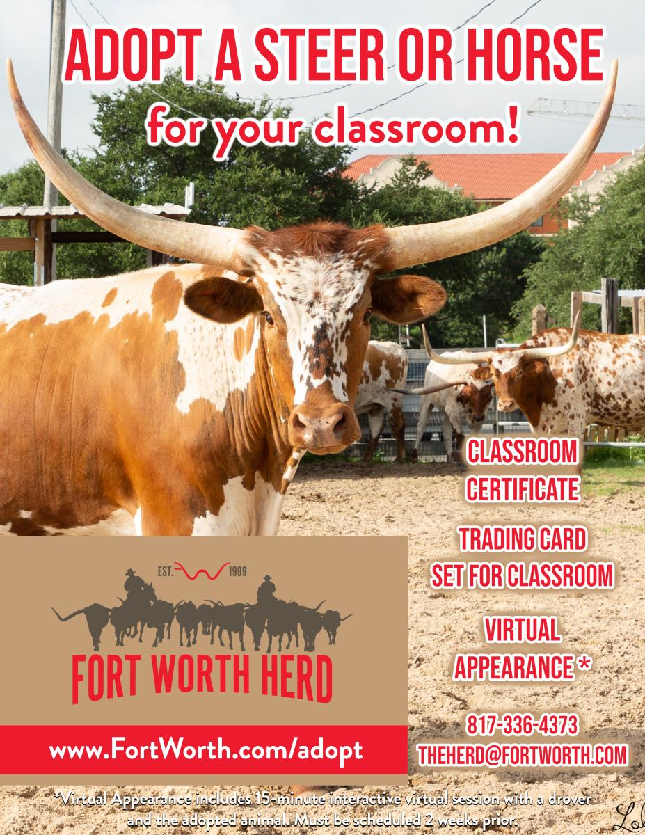 Steer for Classroom