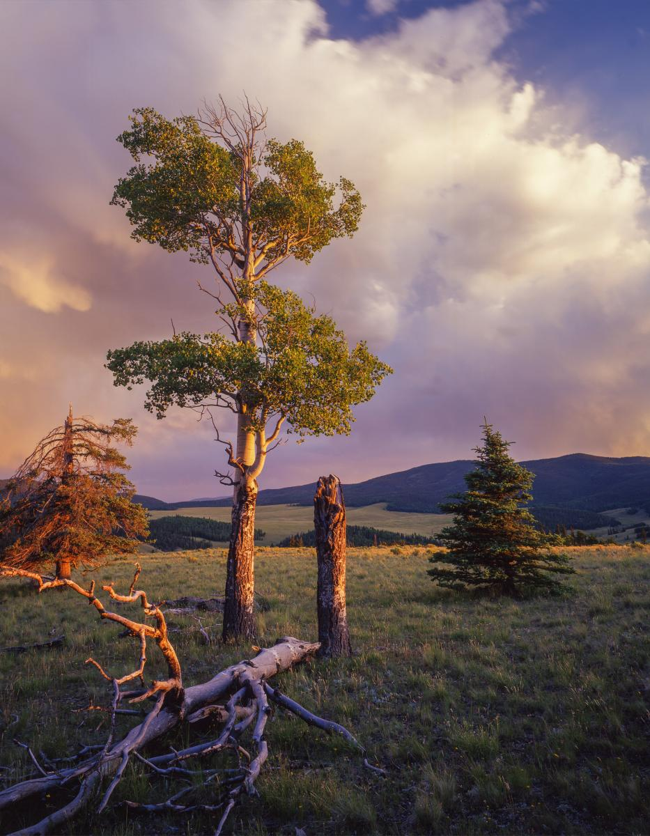 Scenic Driving New Mexico: Exploring the State's Most Spectacular Back Roads, Valle Vidal meadow, New Mexico Magazine