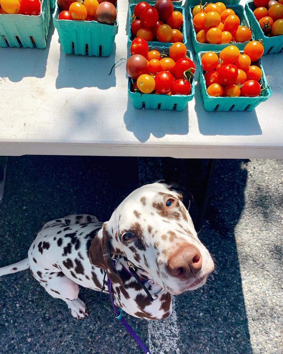 Tomatoes In SoWa Open Marketin Boston, MA