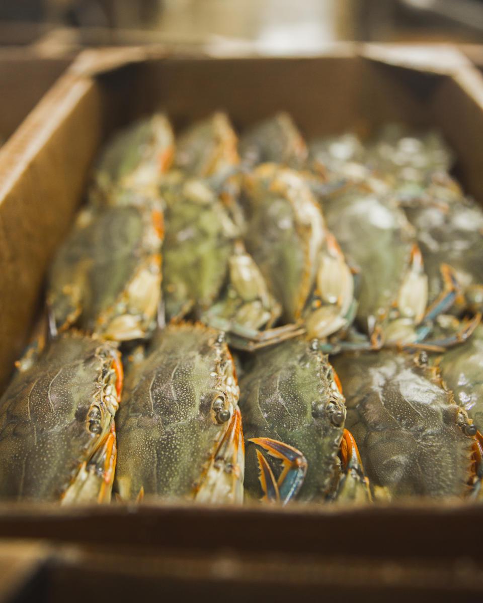 oneals seafood harvest - crab