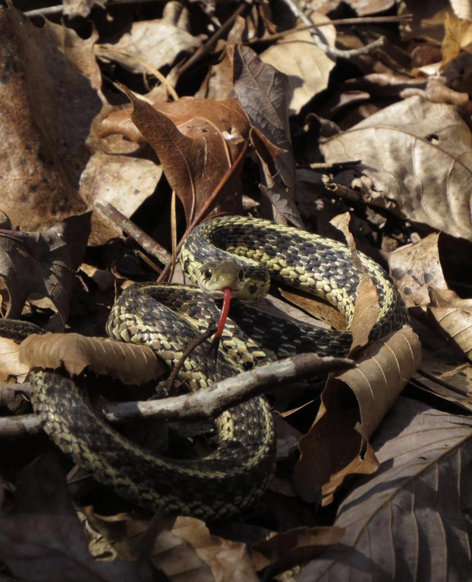 Snake in Bankhead by Sam Calhoun