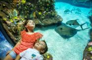 Aquarium kids larger size